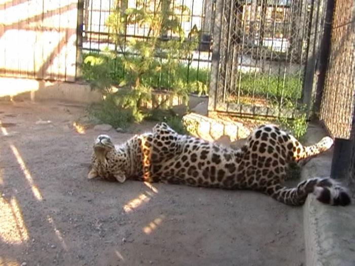 Зоопарк, Чита