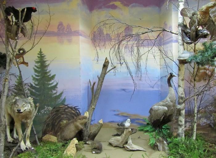 зал природы Белохолуницкий музей