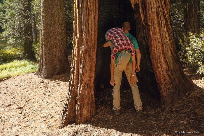 Шеболдасик и Андрюсикс в парке Секвойя, Калифорния, США