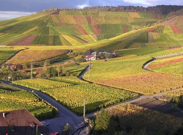 Виноградники в окрестностях Штутгарта