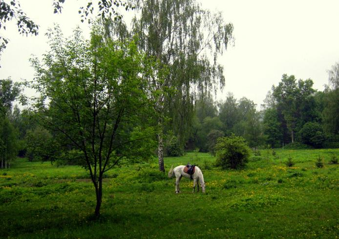 Гефсиманский сад Новоиерусалимского монастыря