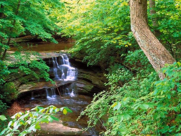 Национальный лес Шоуни в штате Иллнойс
