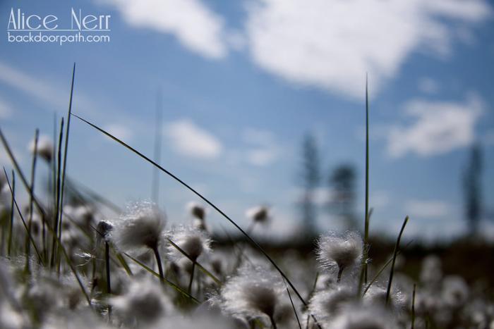 таежные цветочки