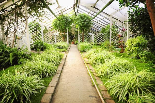 Ботанический сад, Чита