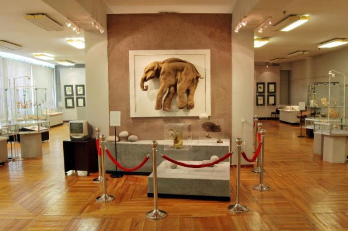 Музей естественной истории, Магадан