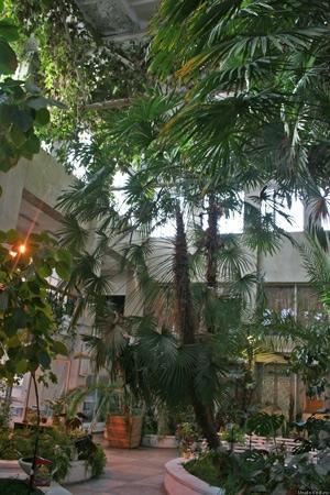 Зимний сад Каслей