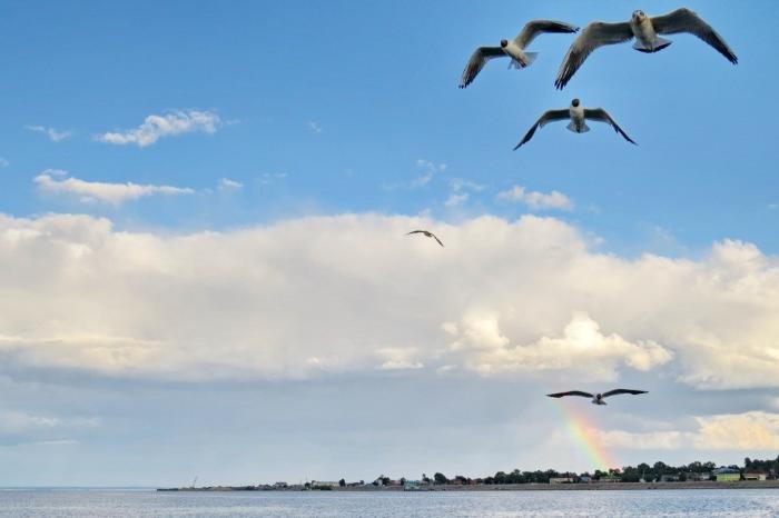 Козьмодемьянск, переправа, паром, чайка, радуга