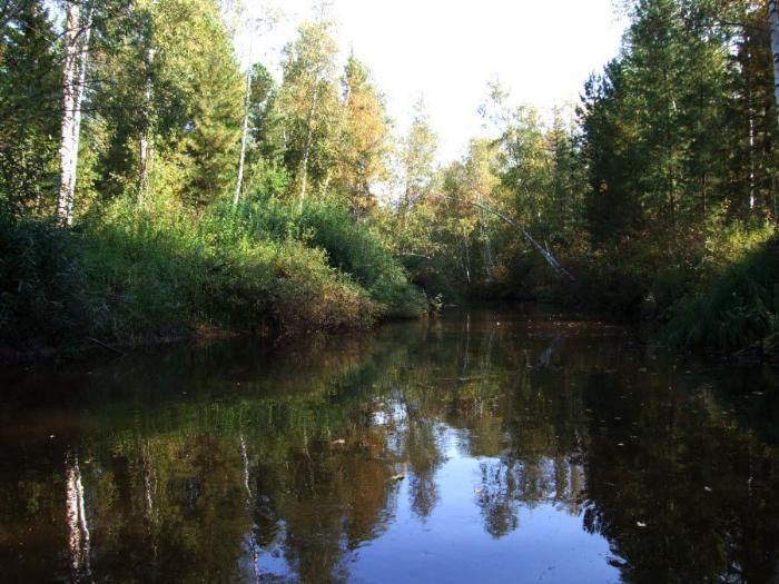 Фото вид на реку из Томского кедровника