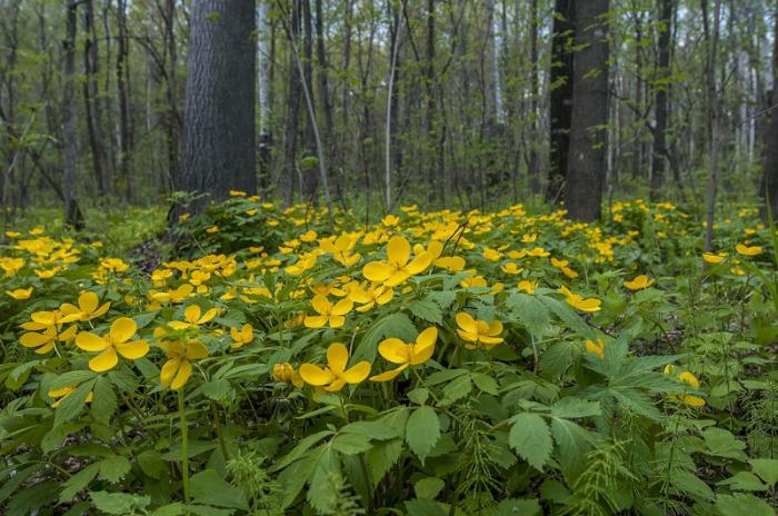 Силинский лес Комсомольск-на-Амуре