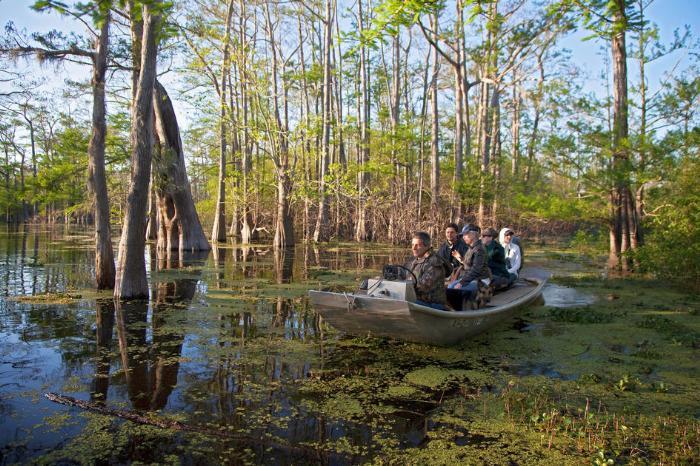 Фото экскурсии по достопримечательностям Луизианы от American Butler