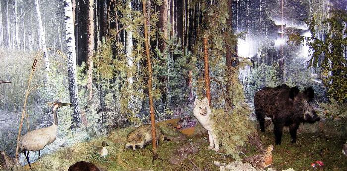 Национальный парк Припышминские боры, Музей природы