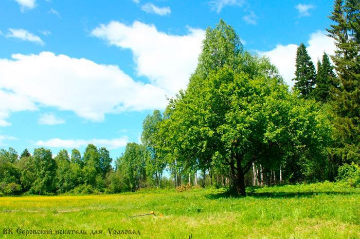 Городской парк Серова