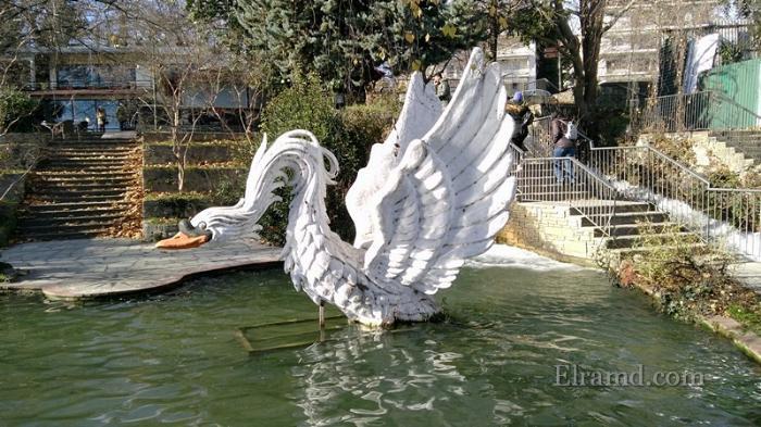 Лебедь в пруду