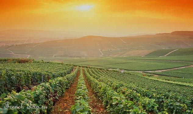 bordeaux-vineyards Виноградники Бордо Аквитания