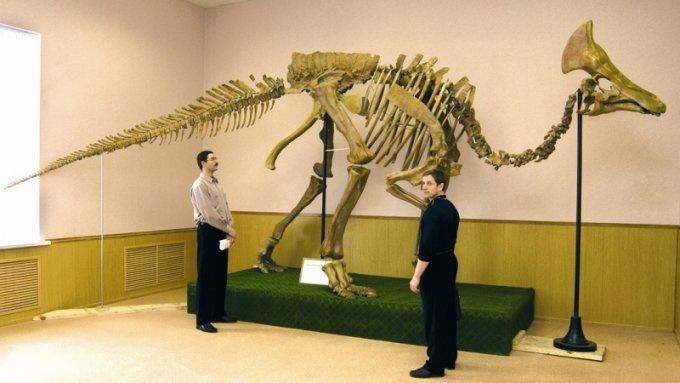 Музей палеонтологии, Благовещенск