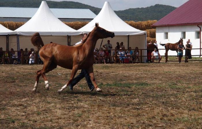 Терский конный завод