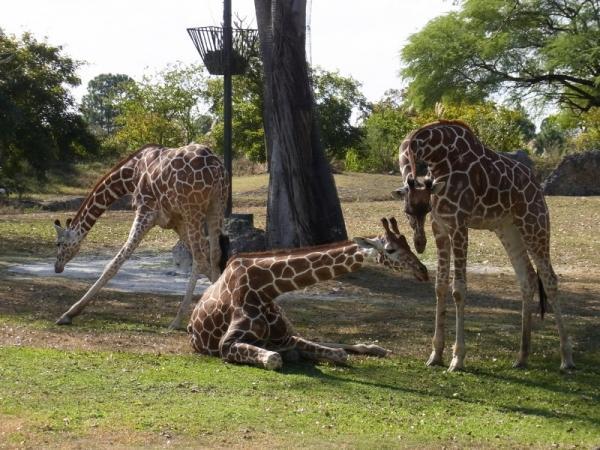 Зоопарк Miami Metrozoo
