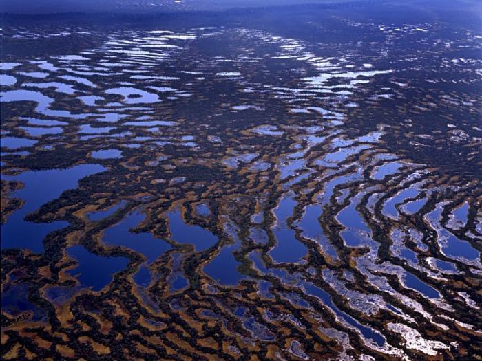 Панорама Васюганских болот фото