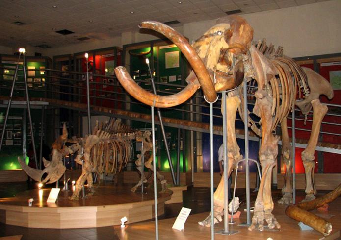 Музей мамонта