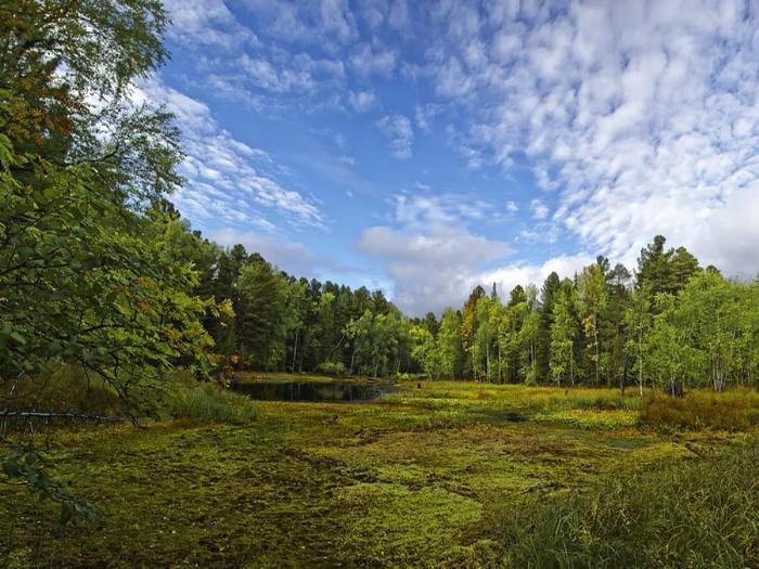 Природа Васюганских болот фото