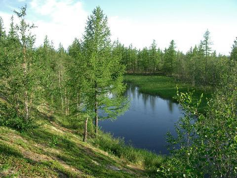 Тазовская тундра, Новый Уренгой