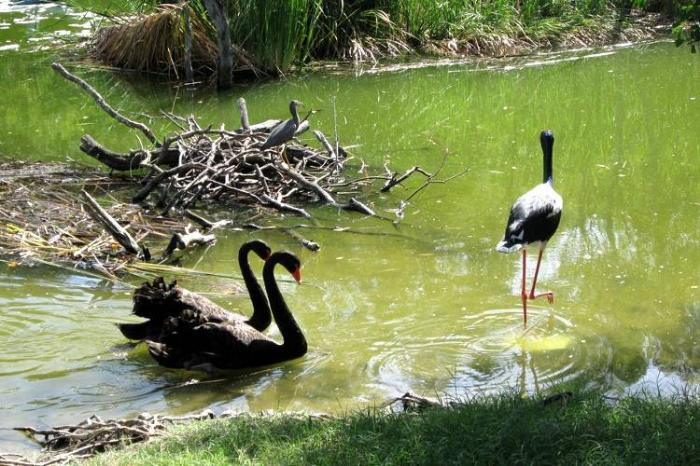 Тропический мир в парке Дейнтри