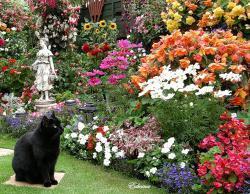 Бирмингемские Ботанические сады