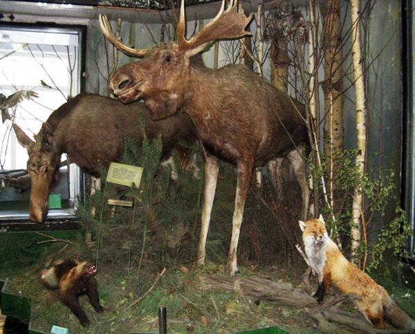 Музей природы, Череповец