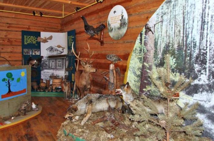Внутри музея «Лес для народа»