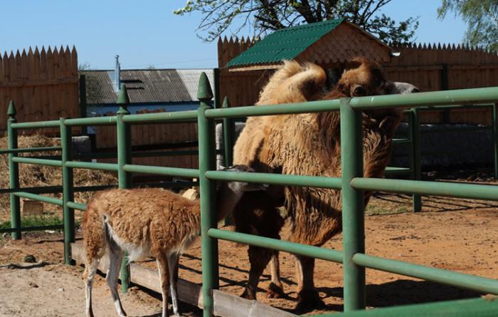 Ряжский зоопарк