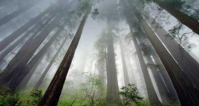 Лучшие национальные парки Калифорнии