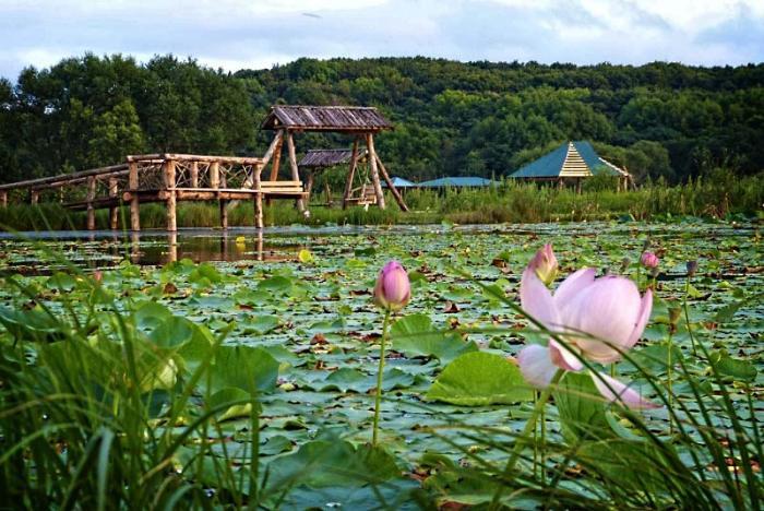 Озеро лотосов, Уссурийск