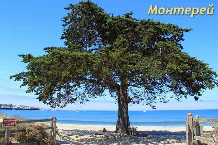 Монтерей