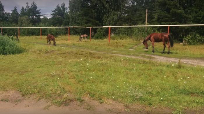 База отдыха «Катюшкины конюшни»