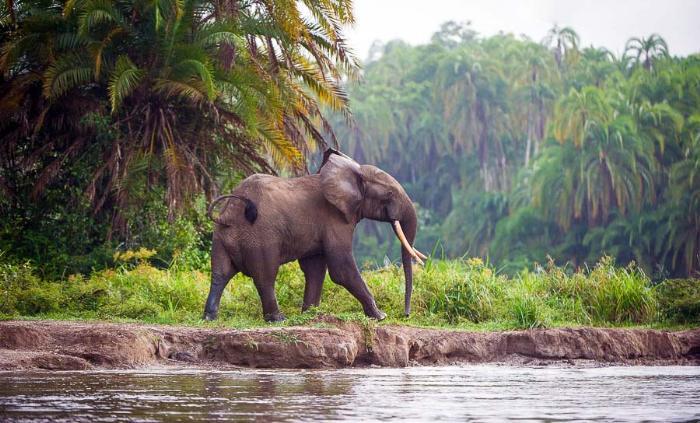 Природа Бенина