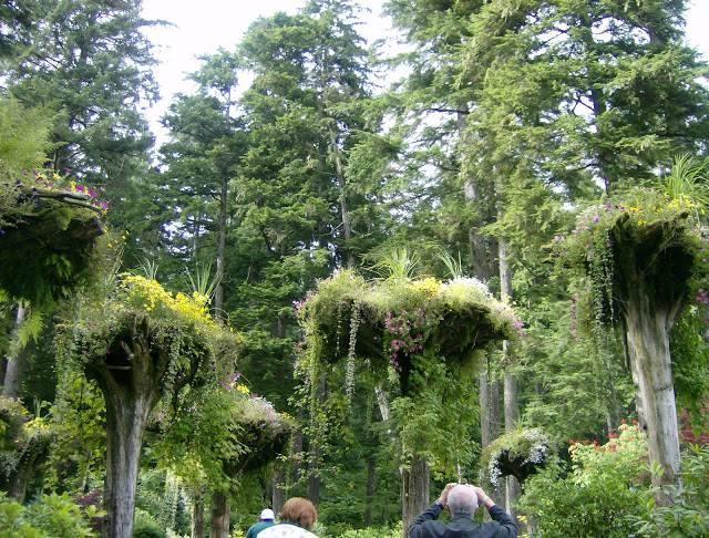 Ботанический сад Glacier Gardens Аляска фото