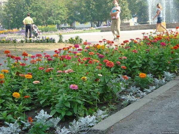 Цветы на городской площади, Сухой Лог