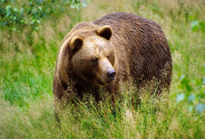 Музей бурого медведя, Петропавловск-Камчатский