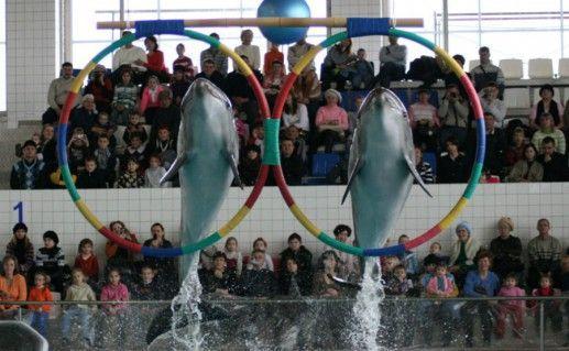Фотография Дельфинарий в Набережных Челнах