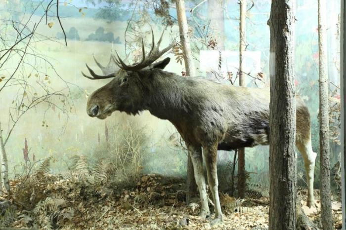 Музей истории и культуры Среднего Прикамья, Сарапул