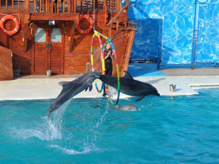 Ялта - дельфинарий